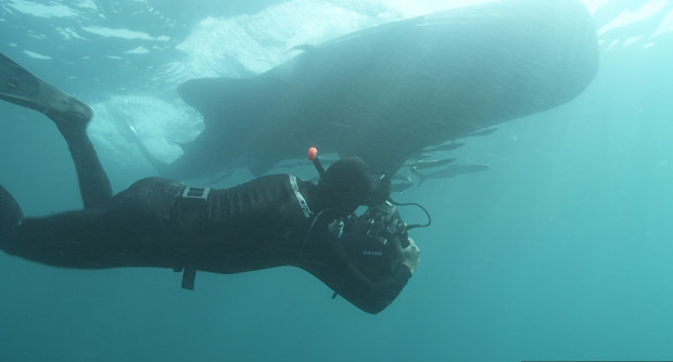BBC-filming-whale-sharks-2